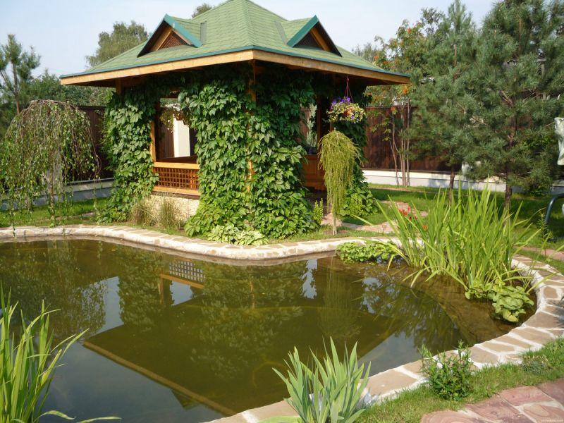Как почистить пруд на даче своими руками:проверенные способы очищения воды