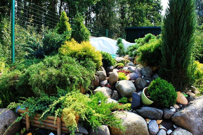 Райский уголок в вашем саду: травянистые многолетники для альпийской горки