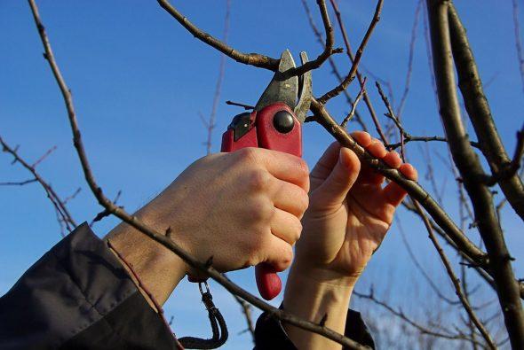 Ветки для изготовления декоративного заборчика