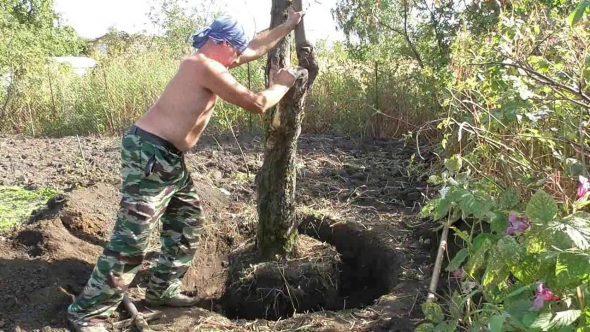 Как очистить дачный участок от деревьев
