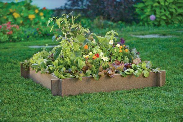 растения на даче