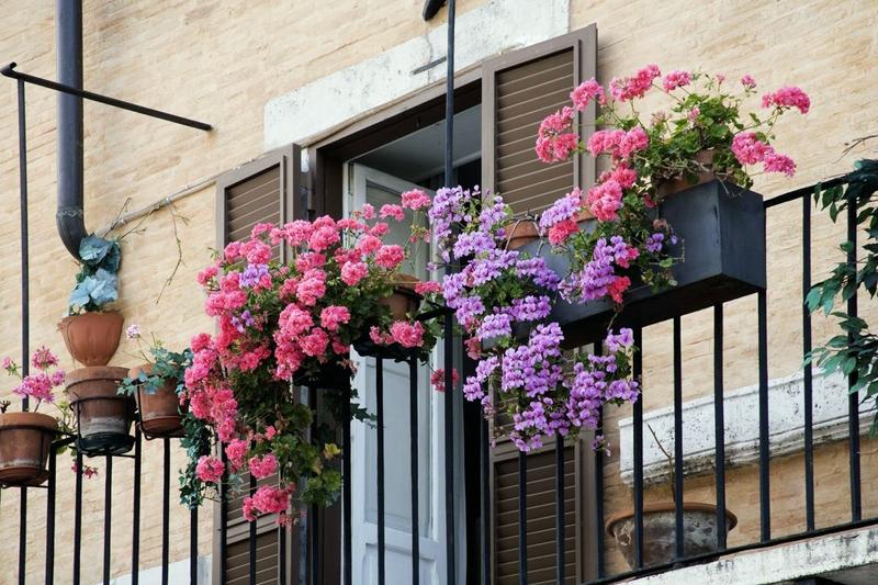 Цветы для озеленения балкона: 10 вариантов с фото