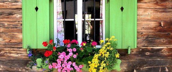 Зелёные ставни и цветы