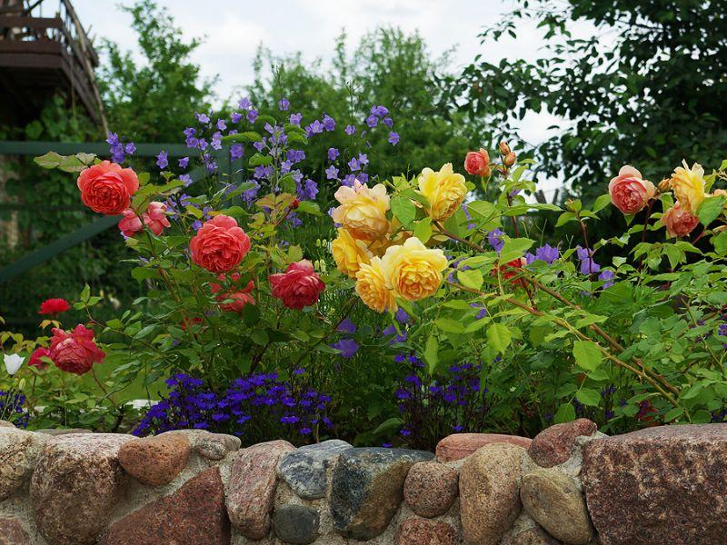 Цветочное великолепие: как красиво оформить клумбу розами