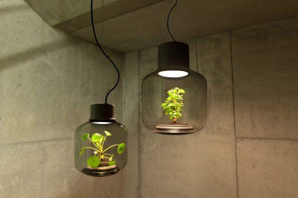 Светильник с живыми растениями