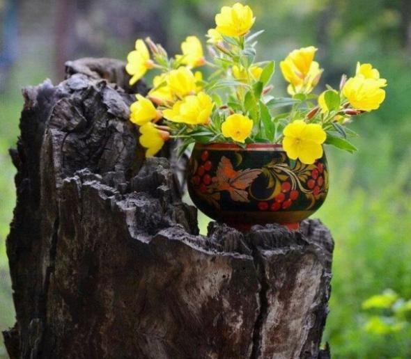 Цветок в горшке на старом пне