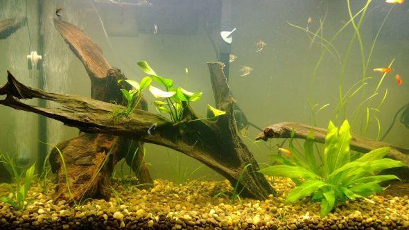 Декорации для аквариума из дерева