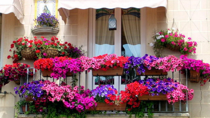 Какие цветы подойдут для балкона