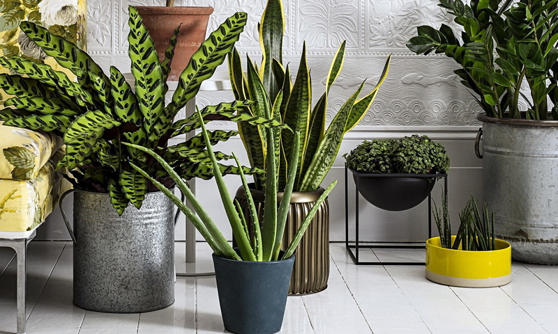 Как поставить цветы дома: оригинальные идеи для любительниц растений