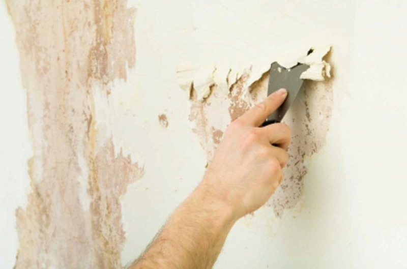 10 действенных способов победить плесень в квартире